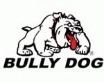 Medium_bully_dog